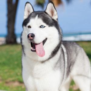 Tierphysiotherapie Hund