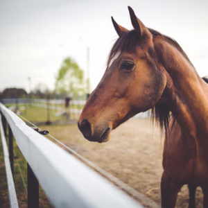 Tierphysiotherapie Pferd
