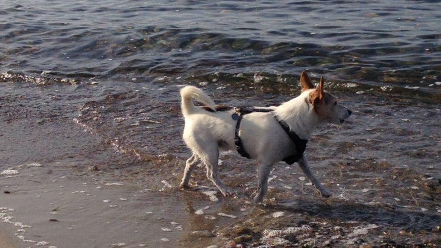 Hund Bandscheibenvorfall