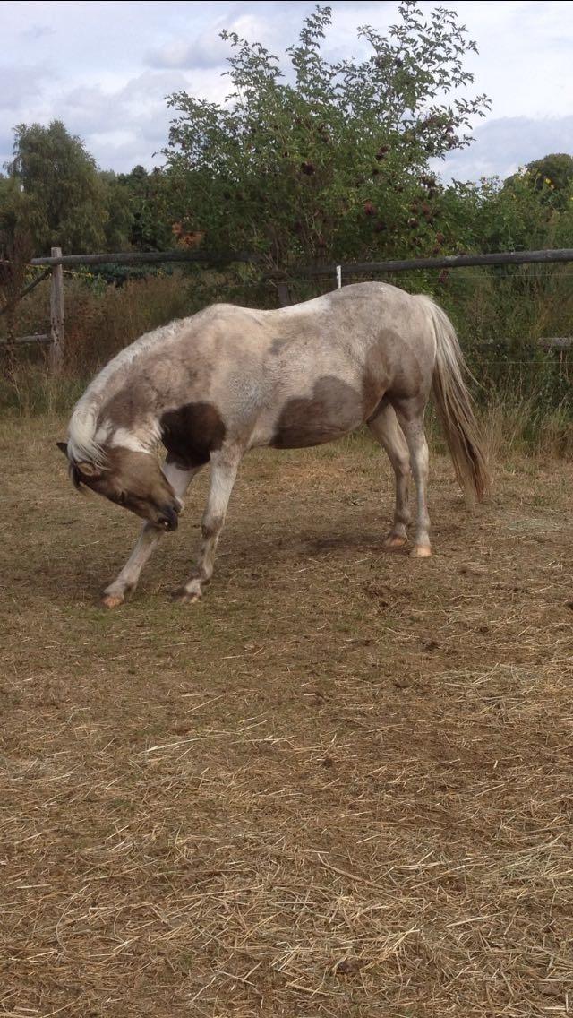 Pferd Rückenproblem