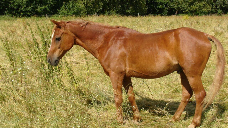 Pferd Spat