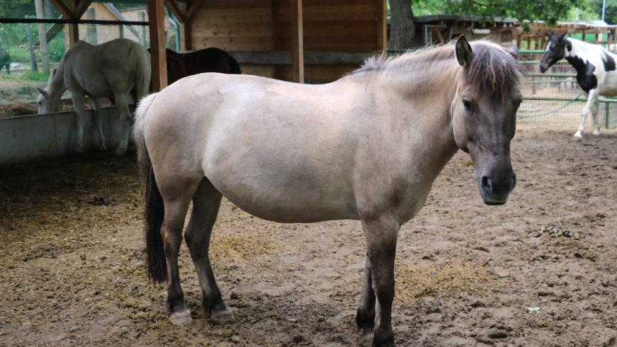 Pferd Kolik