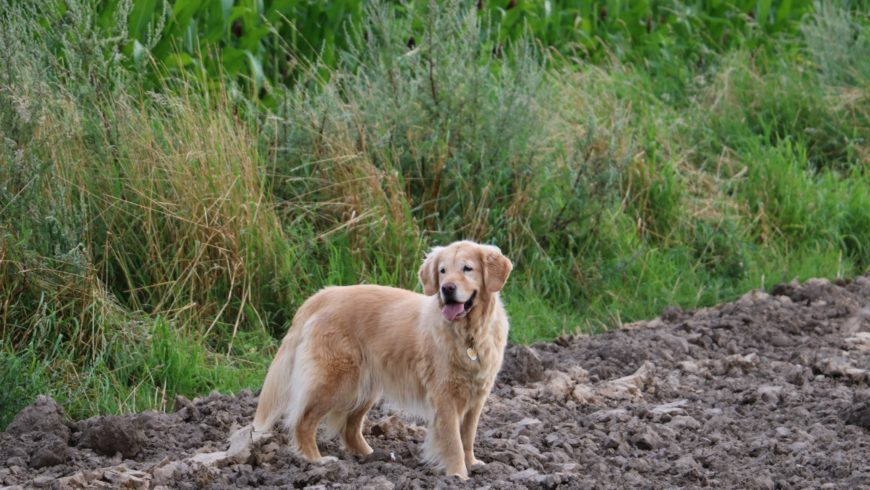 Hund Arthrose