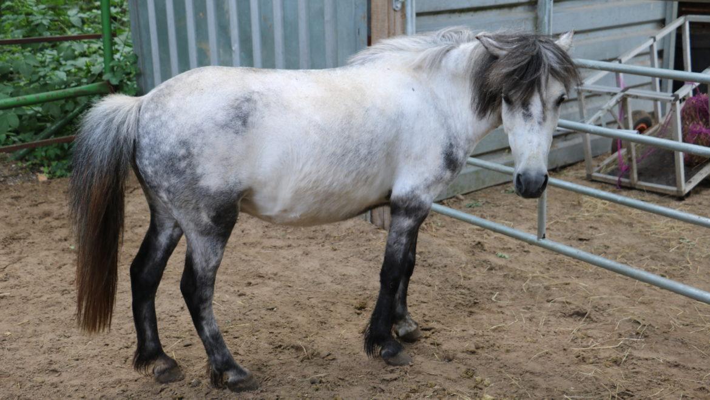 Pferd Akupunktur